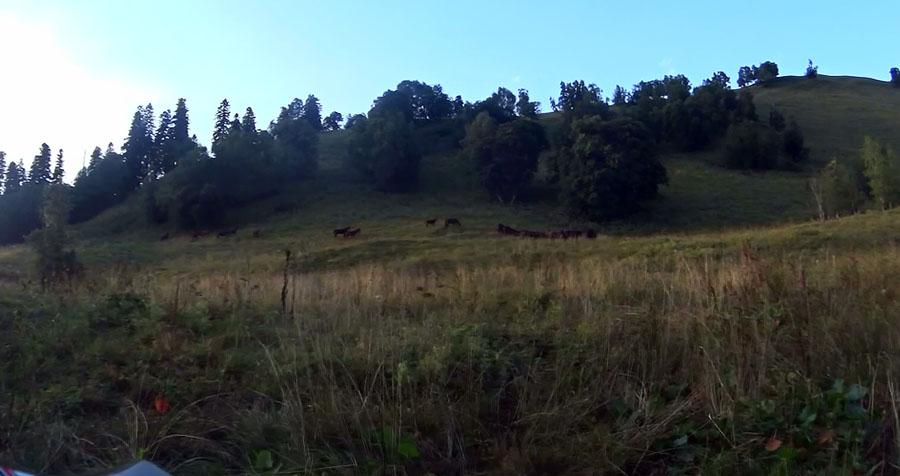 Лошадки в горах